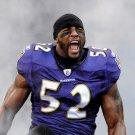 Ray Lewis Baltimore Ravens NFL Sport 32x24 Print POSTER