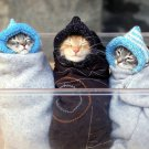 Cute Kittens Cat Babies Funny 32x24 Print POSTER