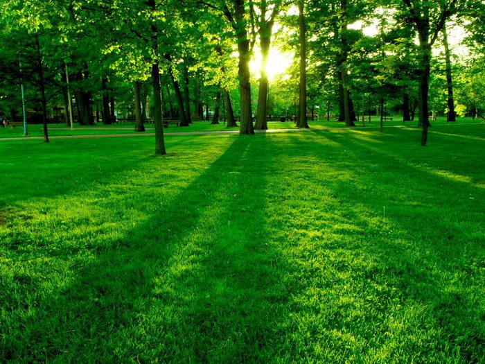 Green Grass Sunlight Trees 32x24 Print POSTER