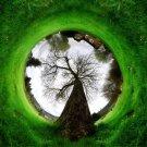 Imagination Tree Circle Grass Nature 32x24 Print Poster