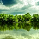 Water Green Forest Landscape 32x24 Print POSTER