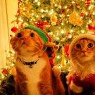 Santa Cats Funny Christmas Ornaments 32x24 Print POSTER