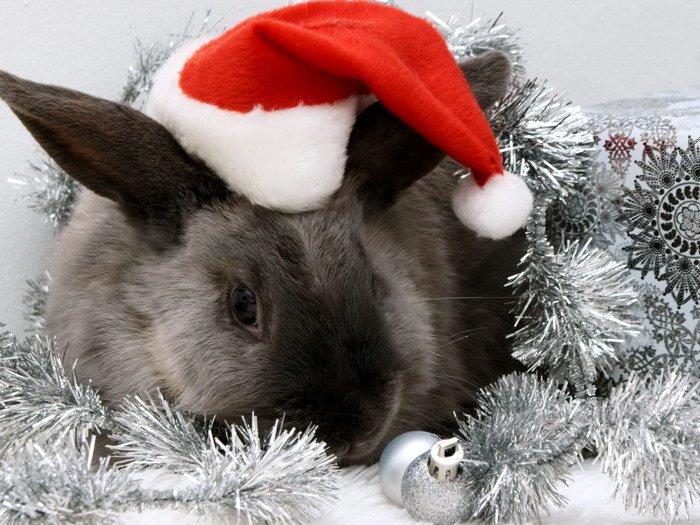 Rabbit Santa Christmas Ornments 32x24 Print POSTER