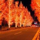 Lights Trees Street Road Christmas 32x24 Print POSTER