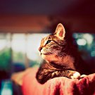 Glamorous Cat Focus Photo Animal 32x24 Print POSTER