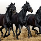 Three Black Steeds Horses Animal 32x24 Print Poster