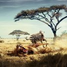 Survival Of The Fittest Animal Cool 32x24 Print Poster