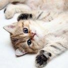 Cute Kitten Nice Cat Animal 32x24 Print Poster