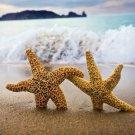 Love Starfish Couple Sea Wave 32x24 Print Poster