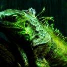 Iguana Fractal Amazing Art 32x24 Print Poster