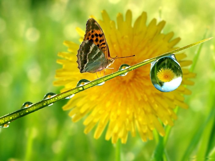 Butterfly Flower Drop Grass Macro 32x24 Print Poster
