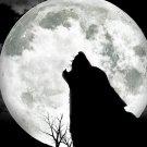 Moon Wolf Night Art 32x24 Print Poster