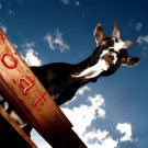 Goat Sky Animal National Geographic 32x24 Print Poster
