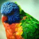 Parrot Bird Macro Animal Nature 32x24 Print Poster