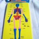Anatomic Puzzle - The Body - The Skelton