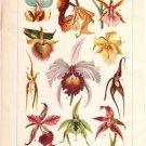 """""""Orchids"""" Color Plate,  BP5"""