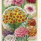 Floral Color Plate, John Lewis Childs,  BP25
