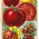 Childs' Peerless Tomatoes Color Plate,  BP27
