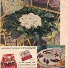 Coca-Cola Ad, 1940 Oldsmobile , AD122