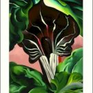 Georgia O'Keeffe Jack in the Pulpit Needlepoint Design by Lena Lawson (ok-27)