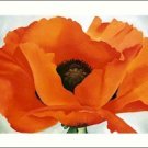 Georgia O'Keeffe Red Poppy Needlepoint Design by Lena Lawson (ok-59)