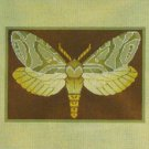 Needlepoint Canvas by Janet Watson Alder Root Moth  (fdp-JW-122