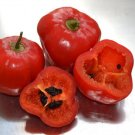 ROCOTO CHILI PEPPER  10+ seeds - FRESH (Capsicum pubescens)