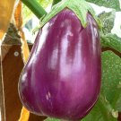 "Eggplant ""rosita"" (beautiful violet heirloom!!) - 12+ seeds!"