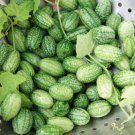 Cucamelon 10+ seeds, cucumber-relative (ORGANIC)