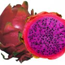Pink Dragonfruit, 10 fresh seeds - RARE! (Hylocereus_costaricensis)