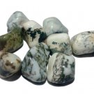 Tree Agate Tumbled Stone - Set Of 7