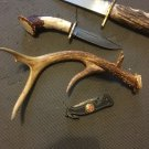 NON TYPICAL 6 Point Whitetail Deer Antler