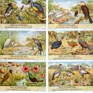 Vogels Van Belgisch Kongo 1955 Collectible Liebig Trading Cards
