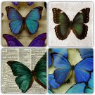 Butterfly - Stone Coasters - Set of 4 pcs. - 10 x 10 cm - 07