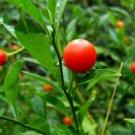 100 Ashwagandha Seeds (Withania somniferum) Organic