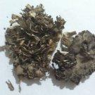 1 oz Maitake Mushroom (Hen of the Woods) Organic & Kosher USA