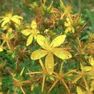 50 St. Johns Wort Seeds (Hypericum Perforatum)