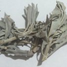 1 oz White Ceremonial Sage (Salvia apiana) Wildharvested & Kosher USA