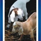 10 GLOSSY MY KIDS CARDS & Trick Prank Business Pride Joy Magic Joke Goat Photo