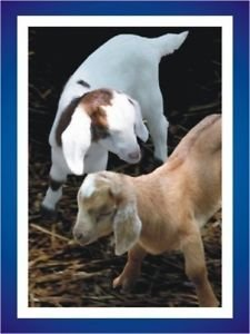 10 GLOSSY MY KIDS CARDS & Trick Prank Business Pride Joy Magic Joke Goat Photo