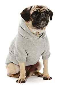 DOG SWEATSHIRT dachshund westie scottie havanese DOG HOODIE clothes USA MADE