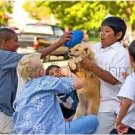 Kids Playing with Dog - 8X10 Color Photo - African-American Hispanic Children