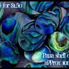 5p paua shell ovals flat pieces