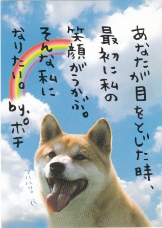 Japan Kamio Puppy w/ Rainbow Postcard KAWAII