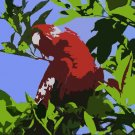 The Parrot Acrylic Pop Art Painting