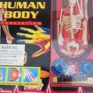 Human Body Kit Fun Station Lab Science Health Bones Skeleton Experiment Stickers