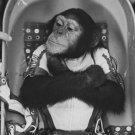 HAM THE CHIMP BEFORE LAUNCH TO SPACE ON JANUARY 31, 1961 - 8X10 PHOTO (AA-984)