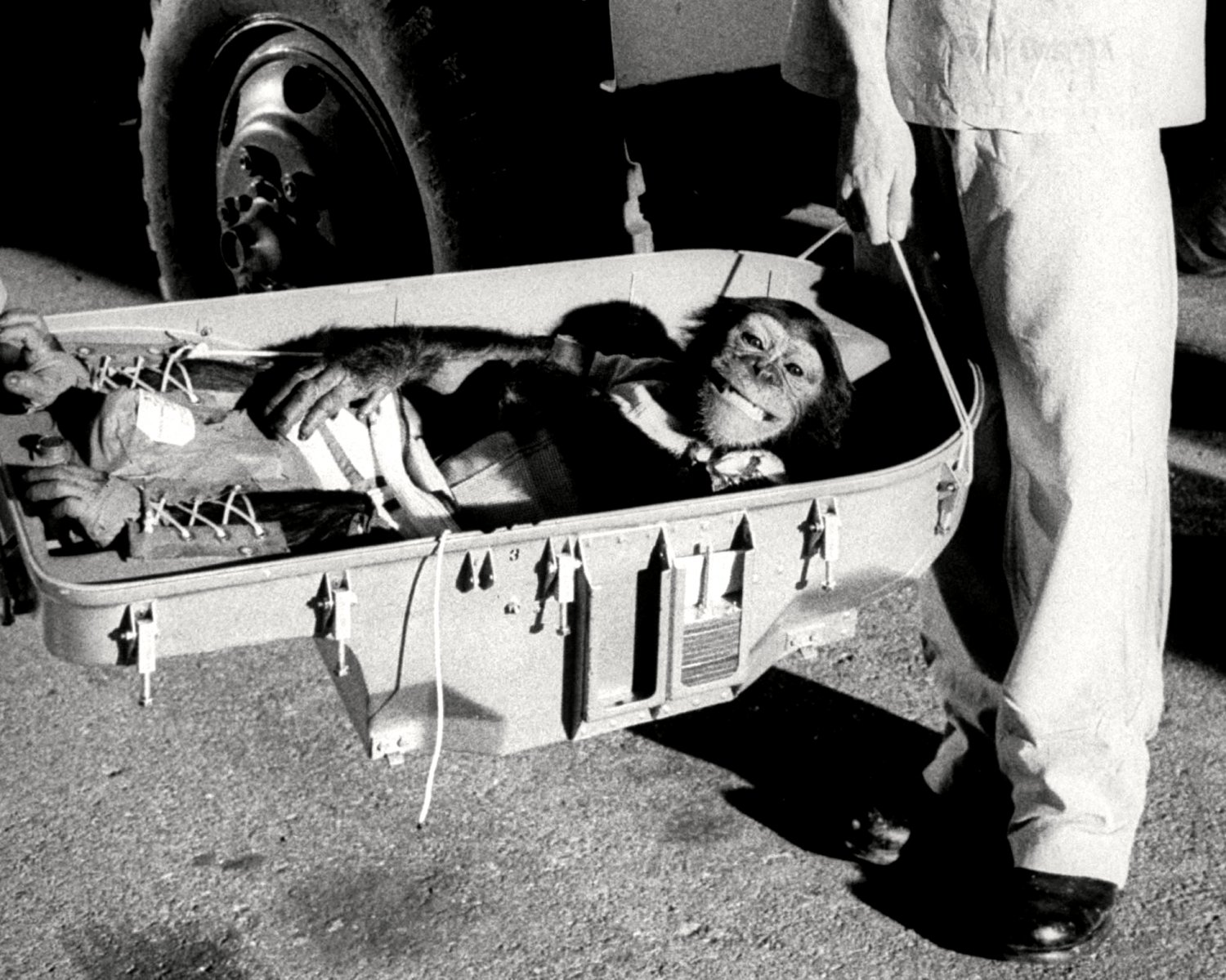 HAM THE ASTROCHIMP SMILES AFTER SUCCESSFUL TEST FLIGHT 8X10 NASA PHOTO (OP-009)