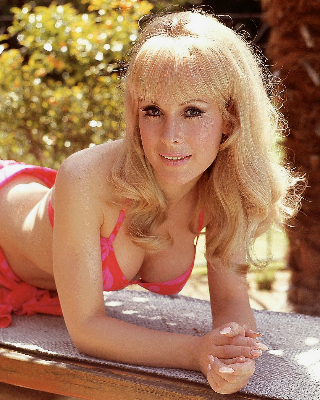 ACTRESS BARBARA EDEN - 8X10 PUBLICITY PHOTO (XEE-080)