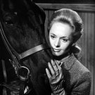 "TIPPI HEDREN IN THE ALFRED HITCHCOCK FILM ""MARNIE"" 8X10 PUBLICITY PHOTO (NN-163)"